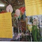 mimosa-nella-vetrina-di-tatiana